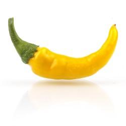 Cayenne geel