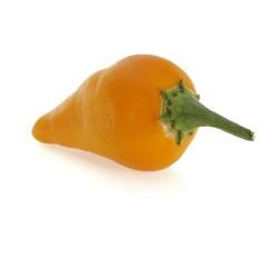 Peruviano arancio