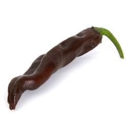 ecuadorian brown