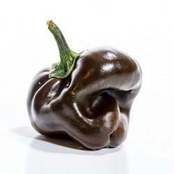chile de onza
